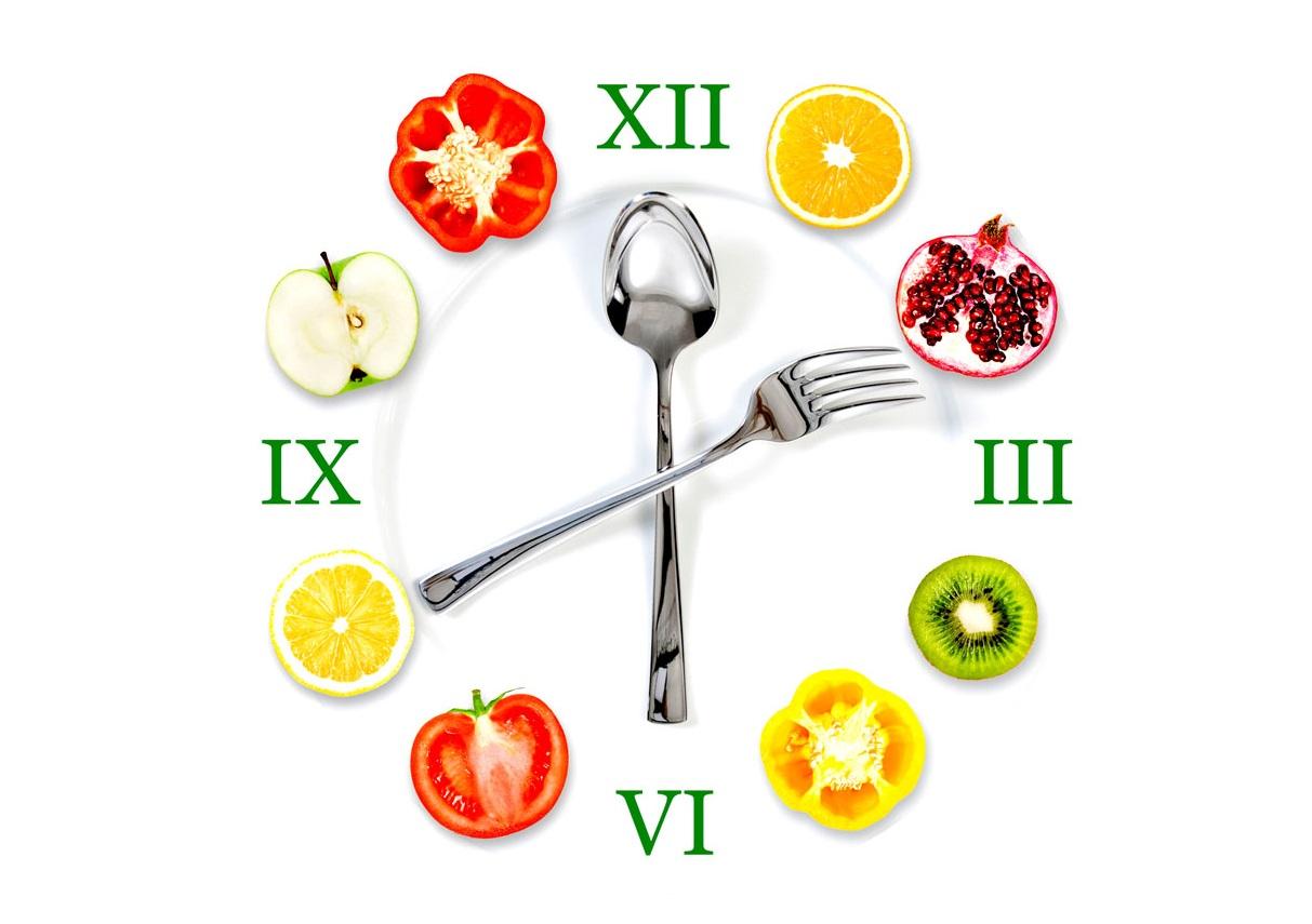 Сколько времени переваривается пища в желудке человека